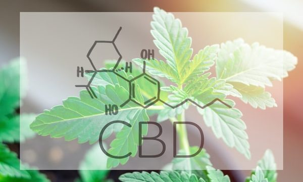 How To Know If You Are Purchasing Quality CBD
