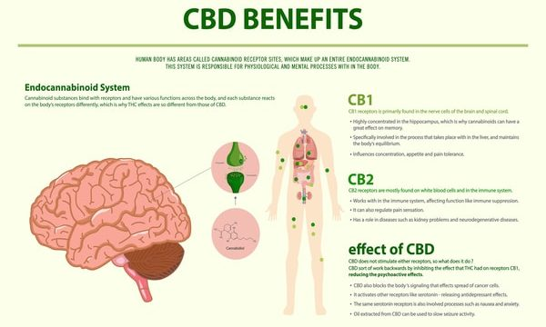 The Established Link between CBD and Health