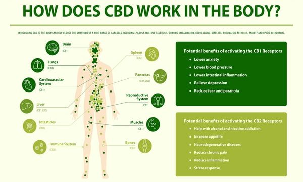 The Effects of CBD on Your Body